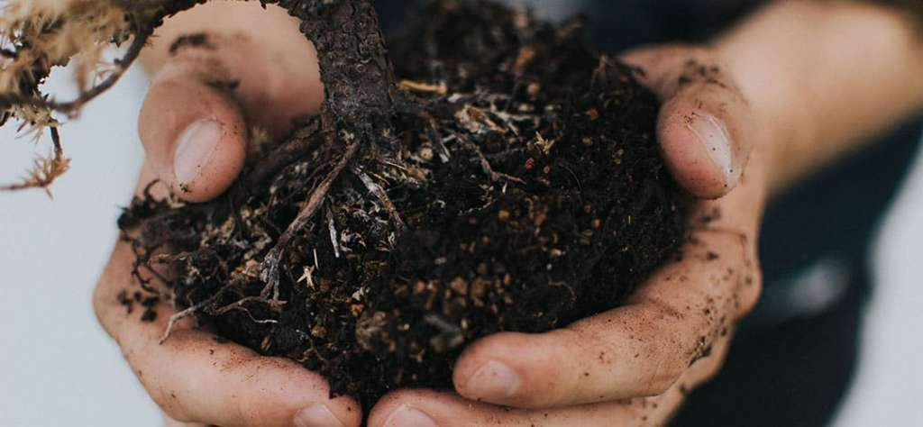 The Power of Organics - Soil on Hands